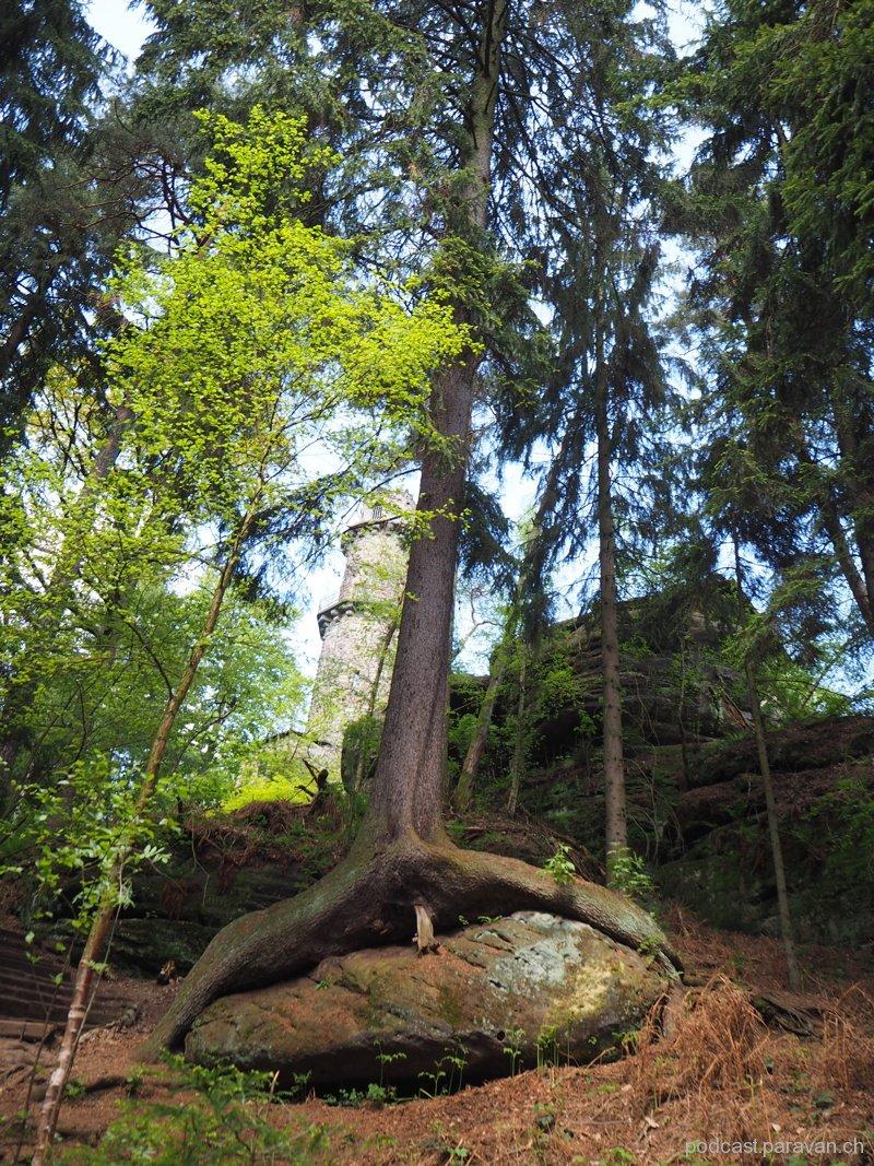 20160511_Sächsische_Schweiz_032