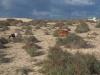20160214_Fuerteventura_037
