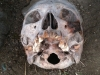 20120409_ParavanPodcast90_003